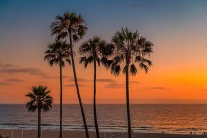 Palm Trees at sunset on a beach in California.