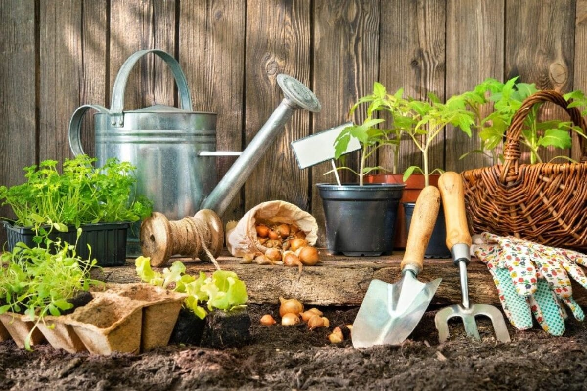 Super Foods You Can Grow Right in Your Backyard